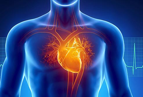 493ss_thinkstock_rf_heart_anatomy_illustration